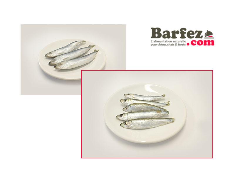Photos Barfez